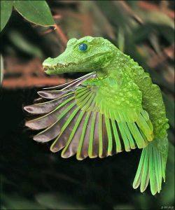 CrocodileOiseau